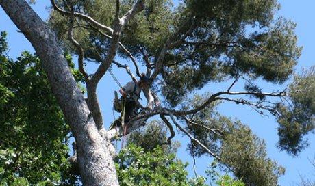 Infos consommateurs élagage abattage Toulon